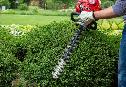 Shindaiwa hedge clippers trimming a shrub