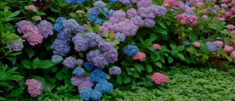 Nursery & Garden