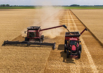 Harvesting a good looking crop at the end of the season