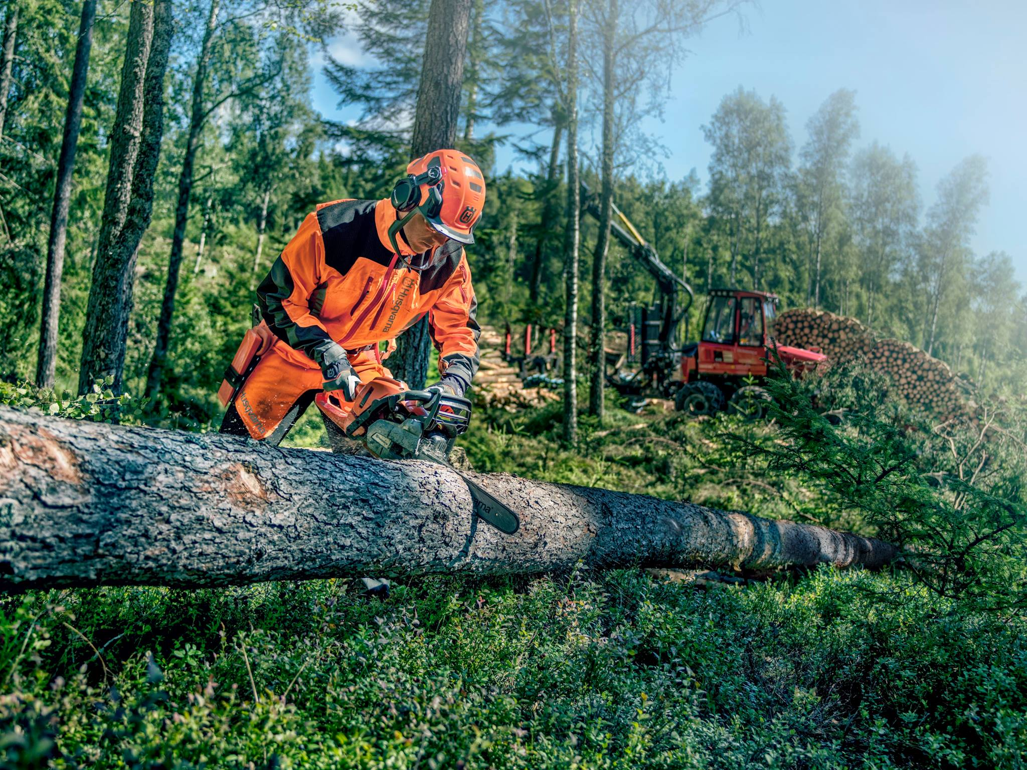 Husqvarna Chainsaw cutting tree