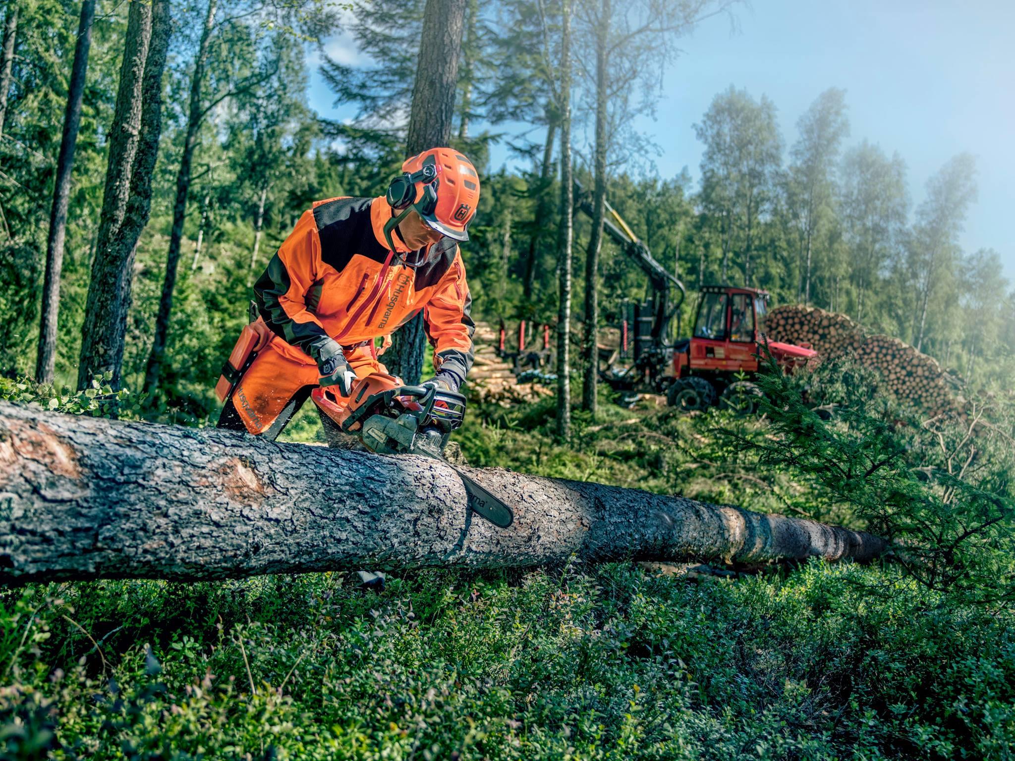 Husqvarna Chainsaw cutting tree
