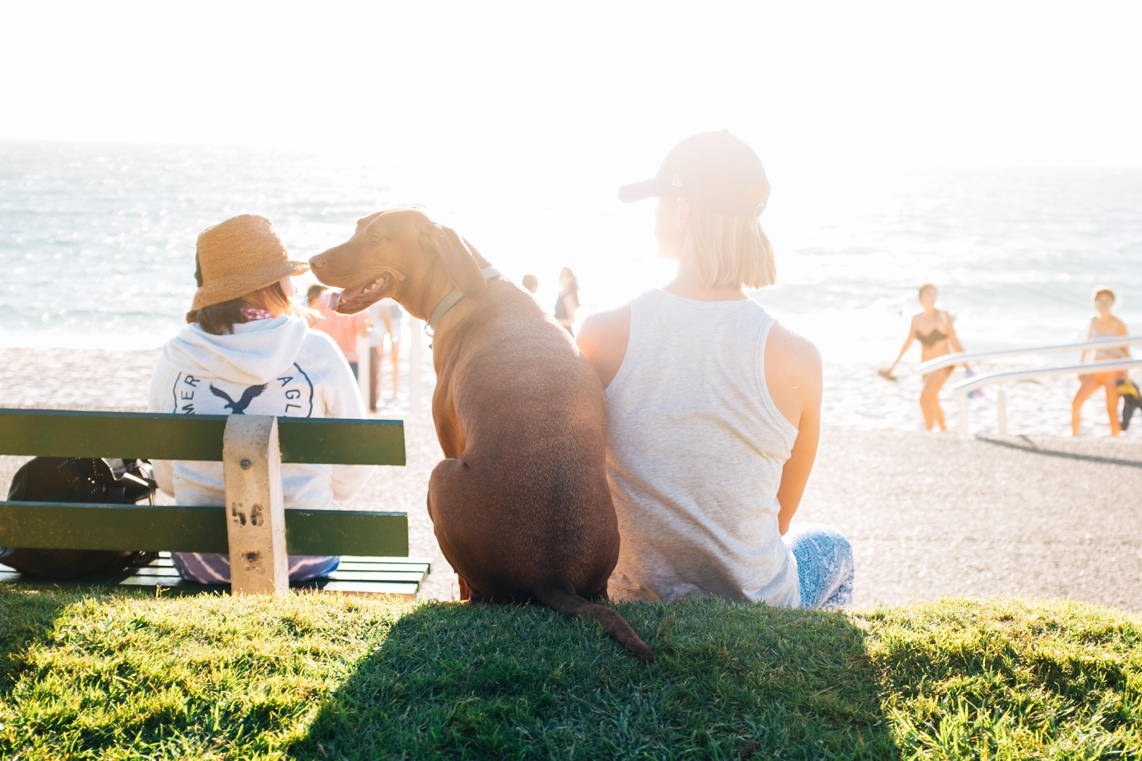 Dog on Shore